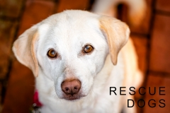Paterno Portrait Rescue Dog