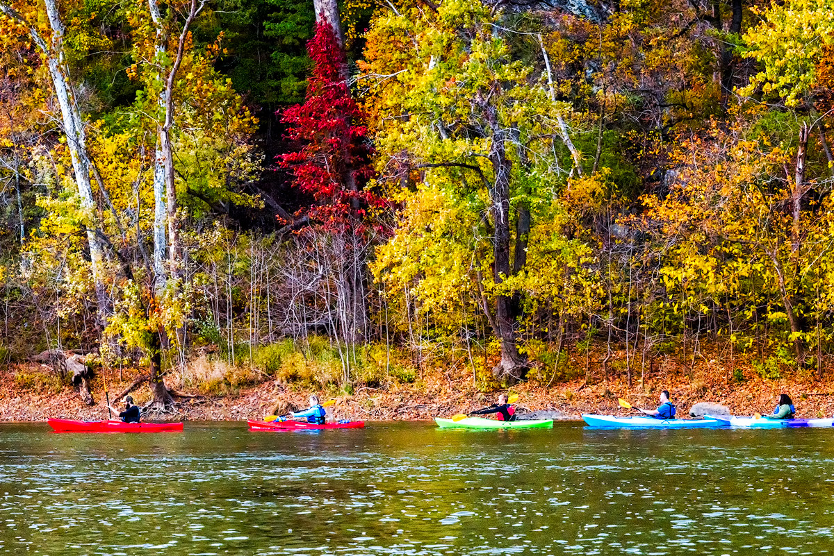 Line of Kayakers Beneath the Leaves