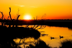Two ducks enjoy an Assateague sunset